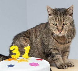 Nutmeg the cat is 31 years old