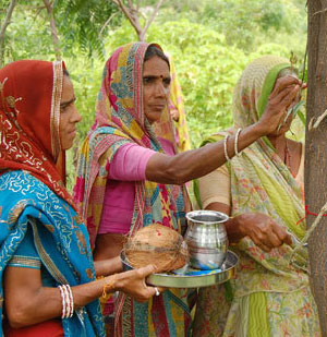 Indian women care for trees