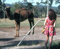 Young Diana looking at a camel