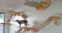 These lucky cats live in an amazing house, for cats